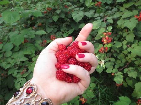 raspberries 017