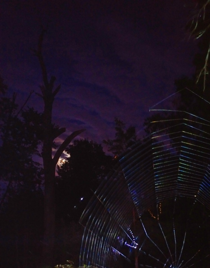 moonlight and spider webs in the Gothic Garden