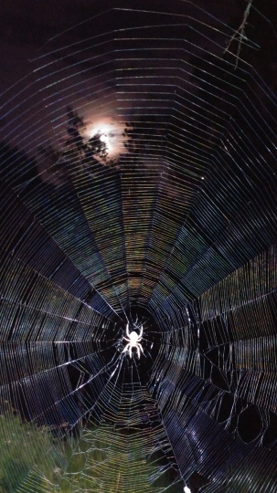 Orb weaver spider making her gossamer web in the Gothic garden under a full moon