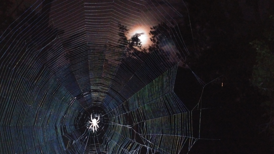 Orb weaver spider in The Gothic Garden under moonlight