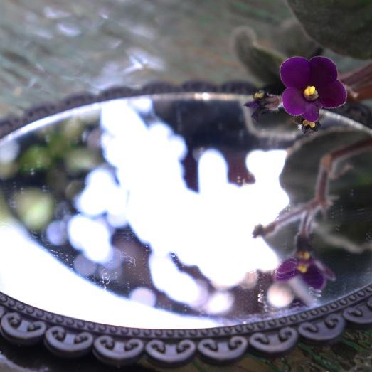 African Violet in the Gothic Garden