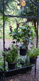 Filigree plant shelf with dark purple Salvia splendens and dark purple Vinca flowers