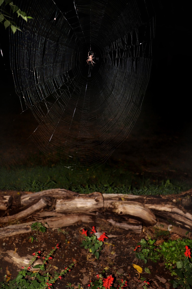 A lovely orb weaver spider weaves he web under the moonlight in The Gothic Garden