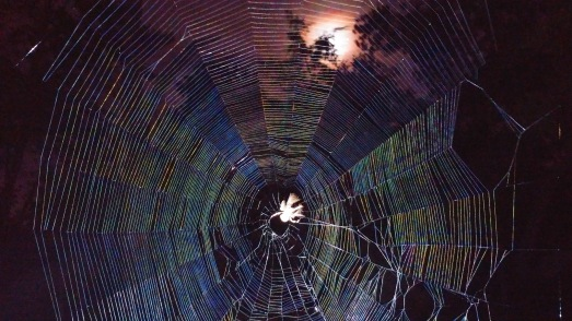 The iridescent web of an orb weaver spider glistening in the moonlight above the Gothic Garden